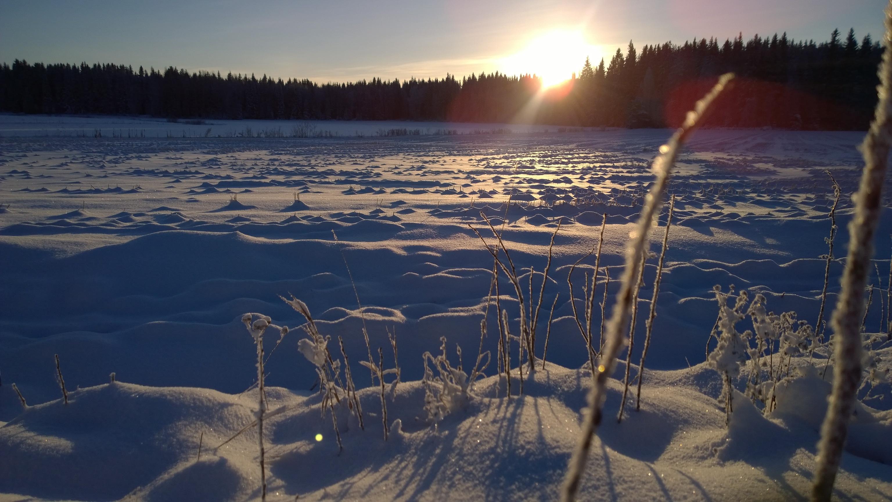 talvinen pelto