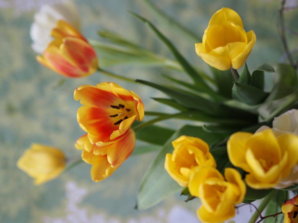 äitienpäivä tulppaanit