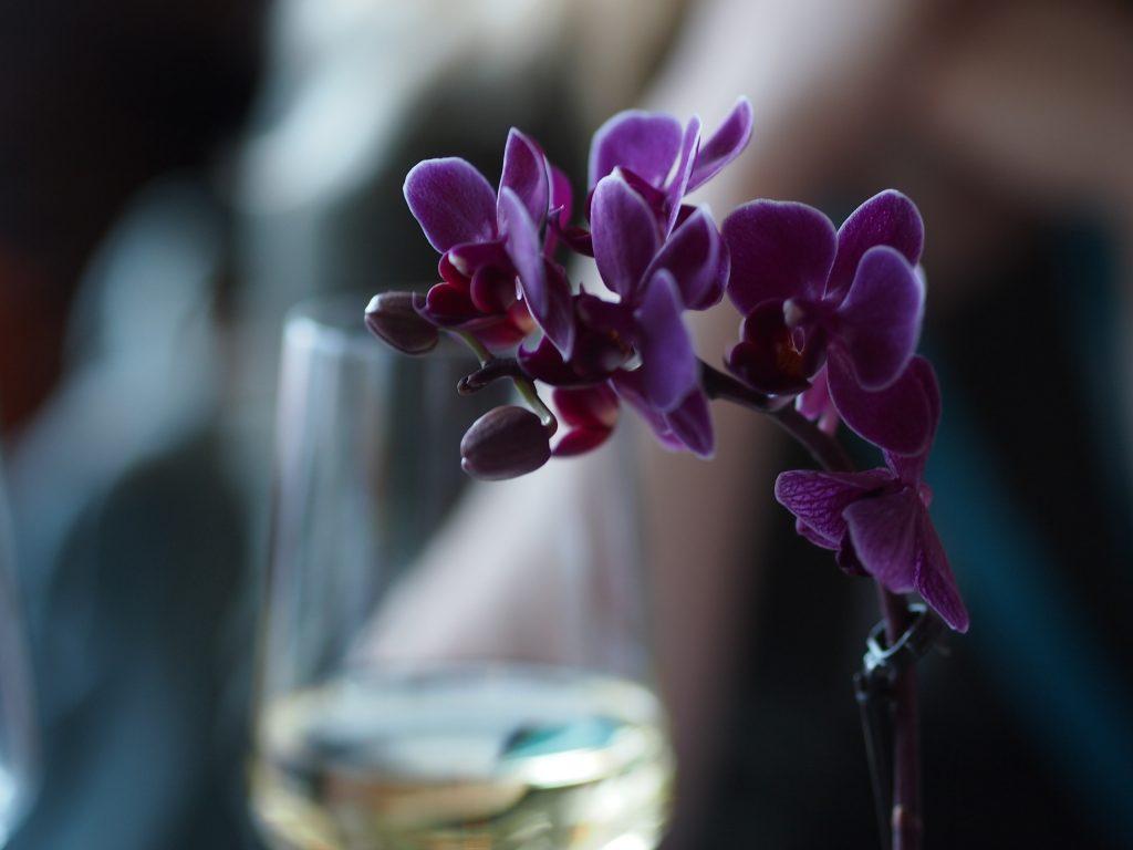 orkidea ping helsinki