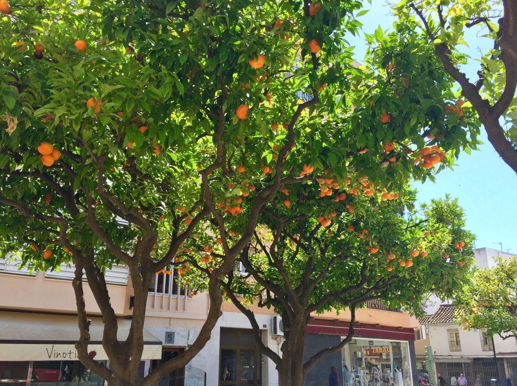 airbnb Fuengirola appelsiinipuut