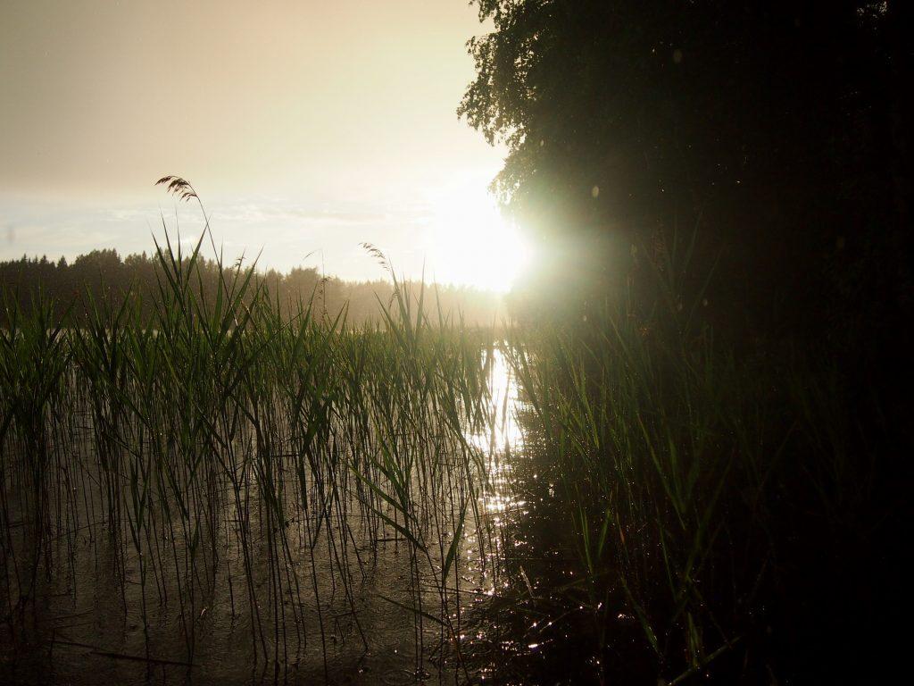 aurinko paistaa ja vettä sattaa