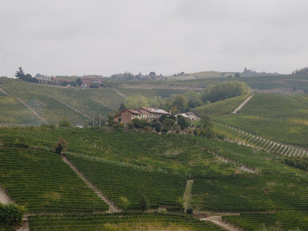 viinitilojen keskellä