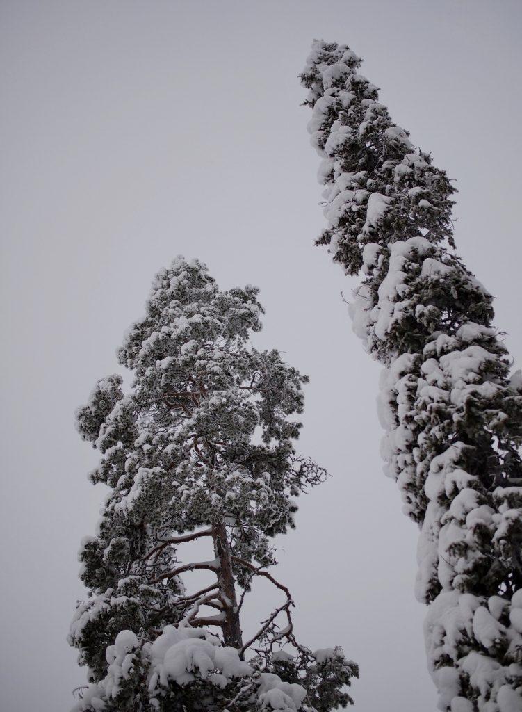 lumiset puut