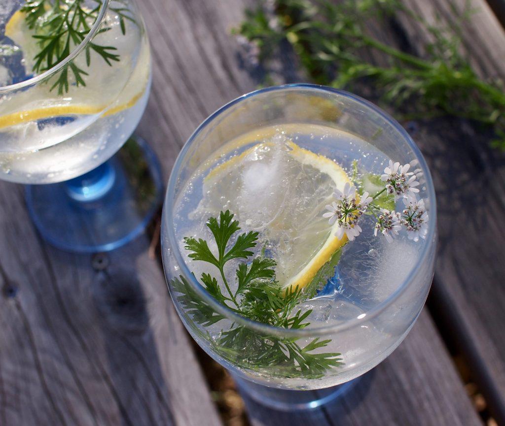 finsbury gin & tonic