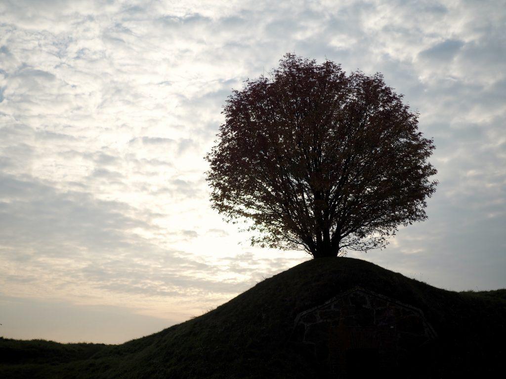 puu rahasta ja rakkaudesta
