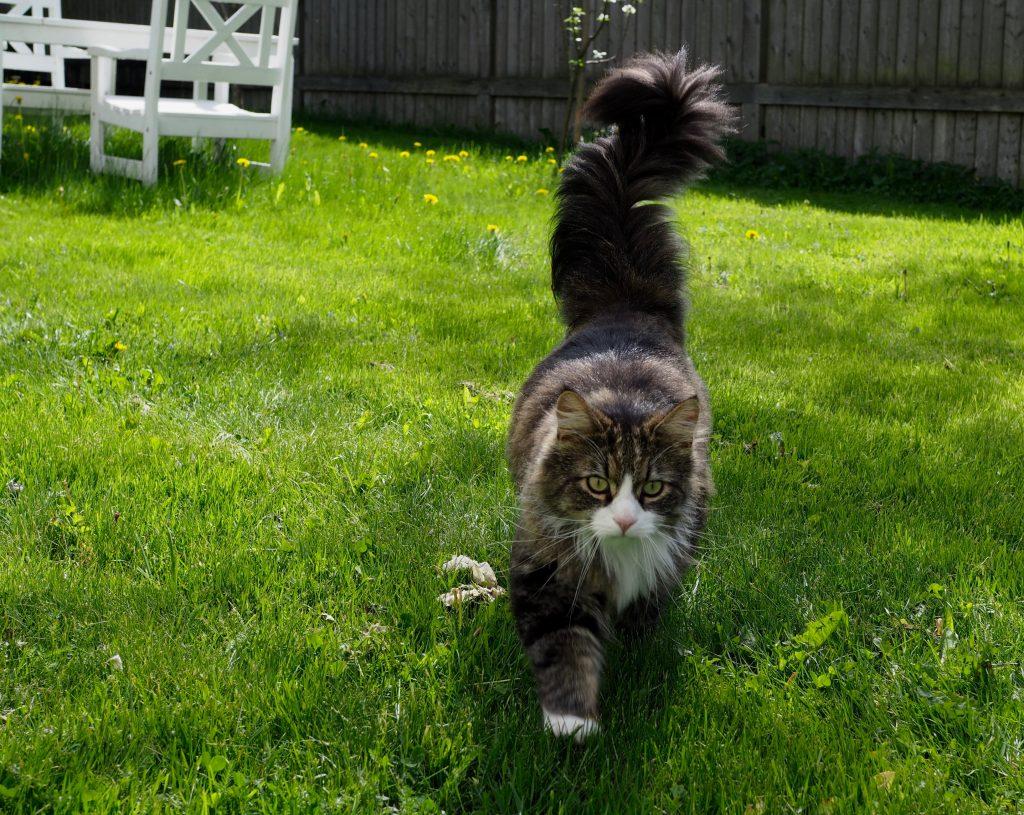 munken kissa